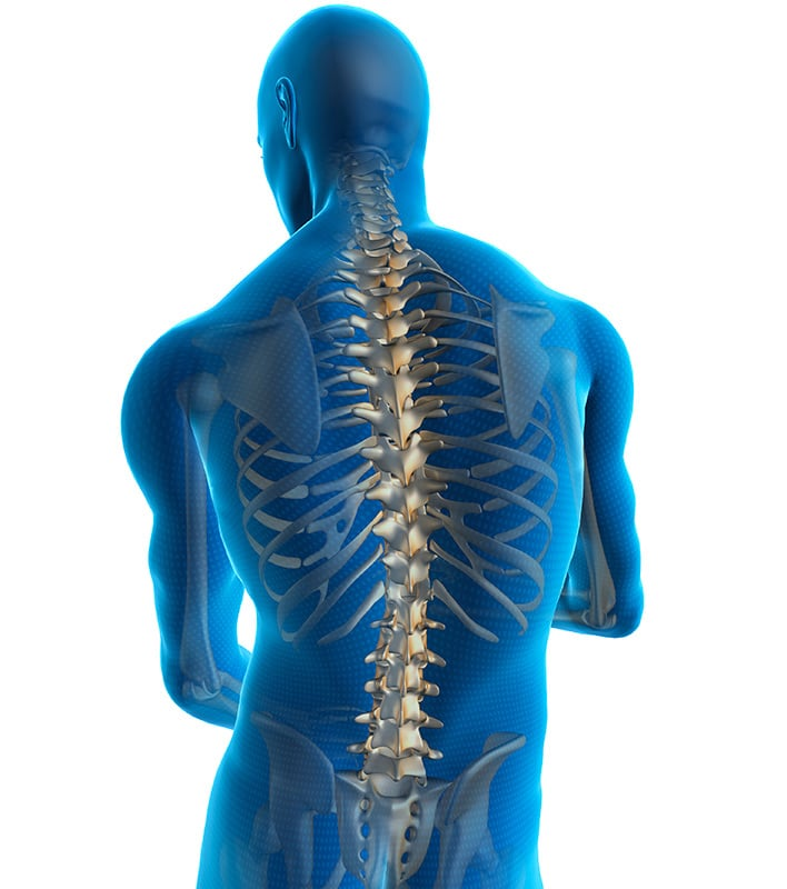human-spine-tall